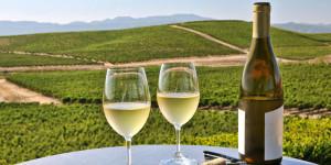 Chardonnay-inside
